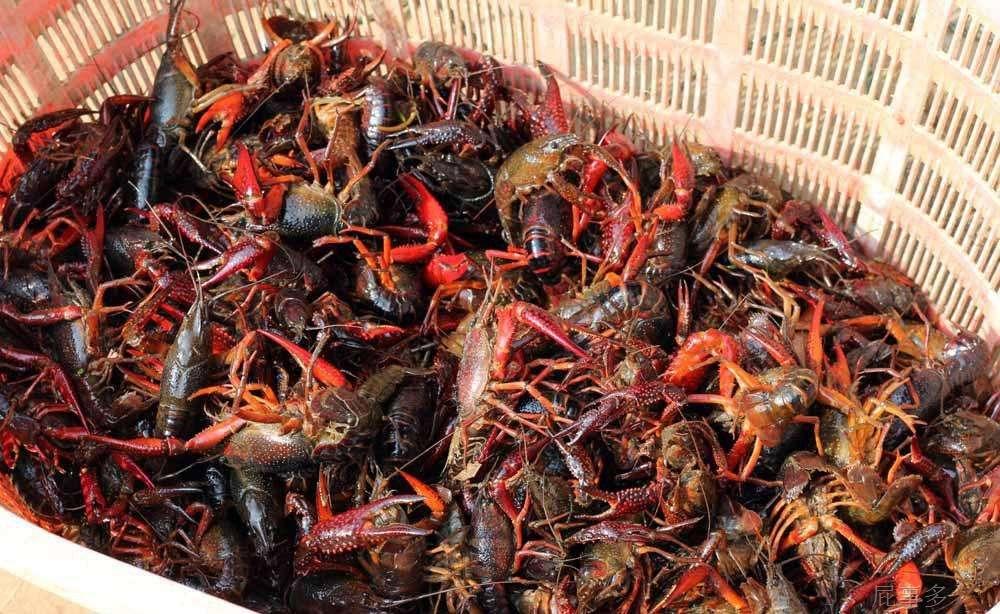 吃多小龙虾体内会长寄生虫?5月这些谣言你入坑了吗