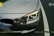 小鸟撞车灯车主担全责 警察:难道要鸟负责?